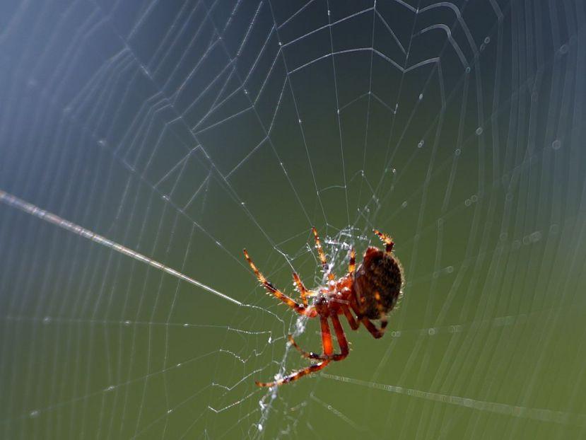 SPIDER home_2_bg_091303